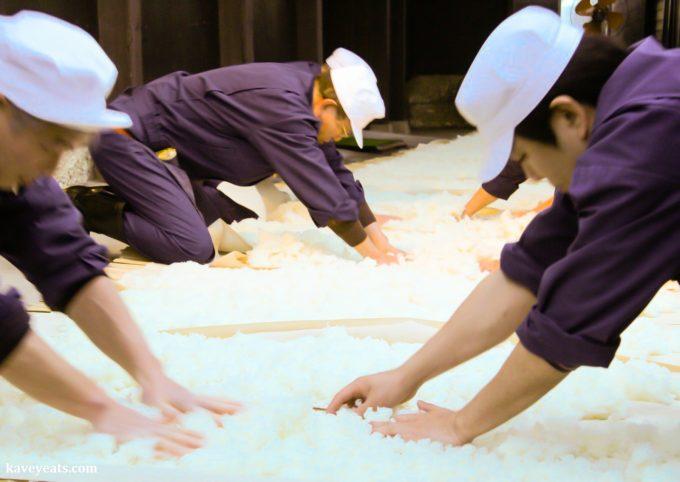 Cooling down steamed rice (Urakasumi Sake Brewery)