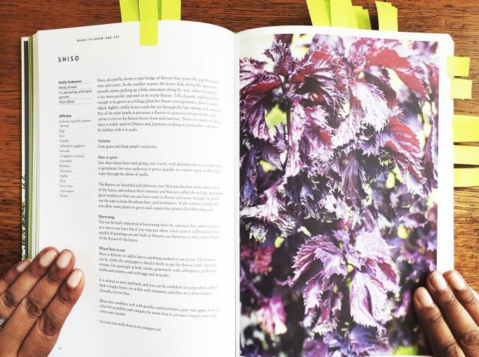 A page on Shiso in Mark Diacono's Herb